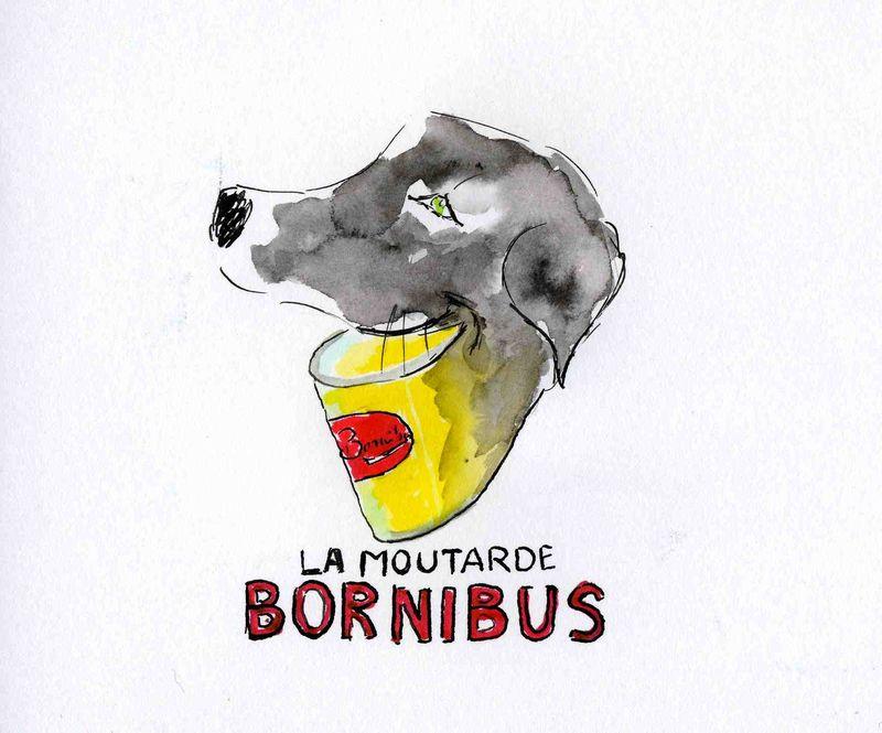 28)Bornibus