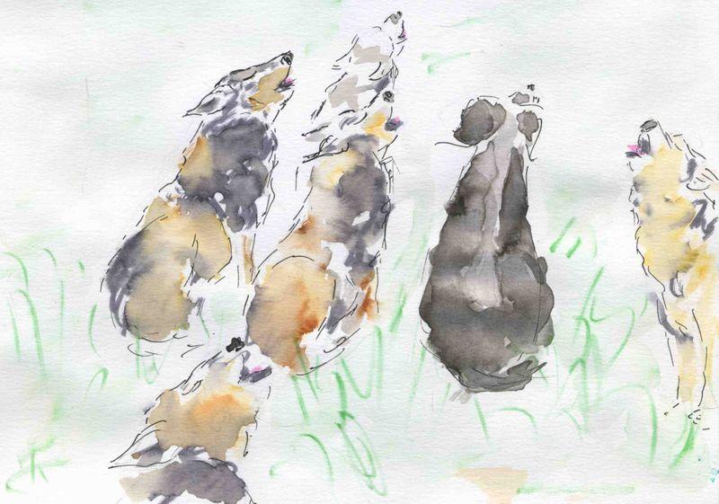 60) hurler avec loups