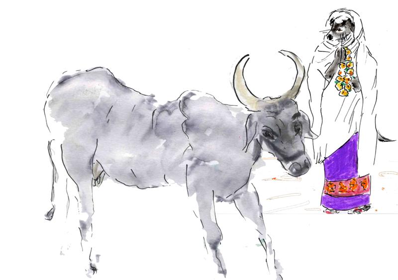 118) vache maigre OK