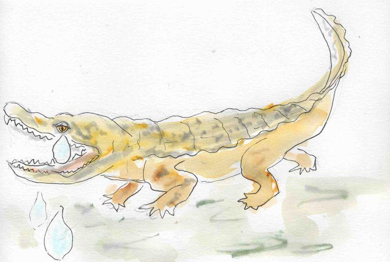 129) larmes Crocodile