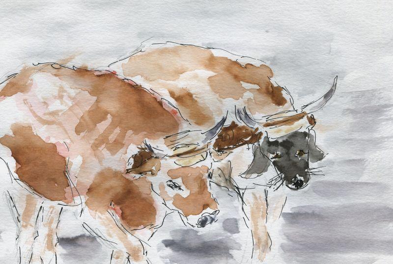 361) Pas des bœufs