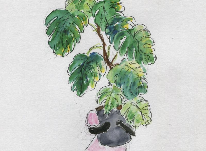 627) Une belle plante