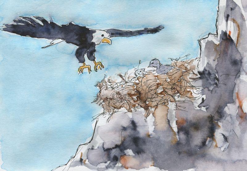 429) Un nid d'aigle