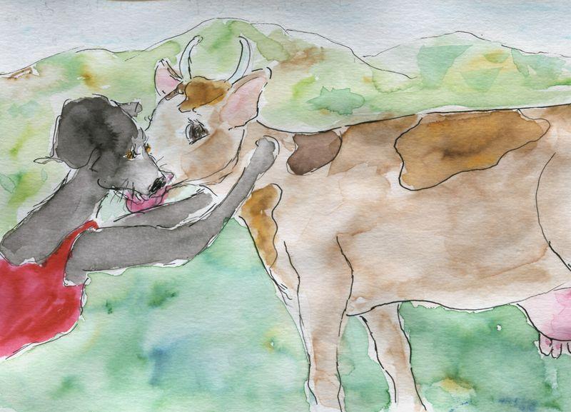 434) amour vache